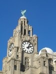 The iconic Liver Building - and bird